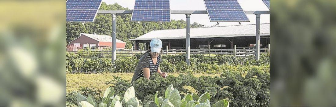 ap-ingenieria-como-afectara-la-produccion-de-electricidad-en-colombia-el-fenomeno-del-nino