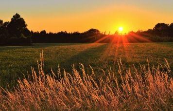El campo avanza, con la combinación de la Agricultura y Energía Solar