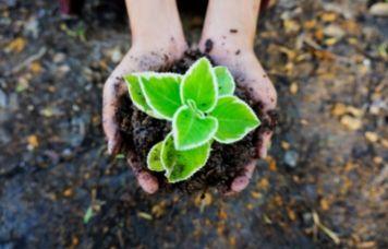 Países pequeños como Costa Rica hoy son ejemplo de sostenibilidad ecológica